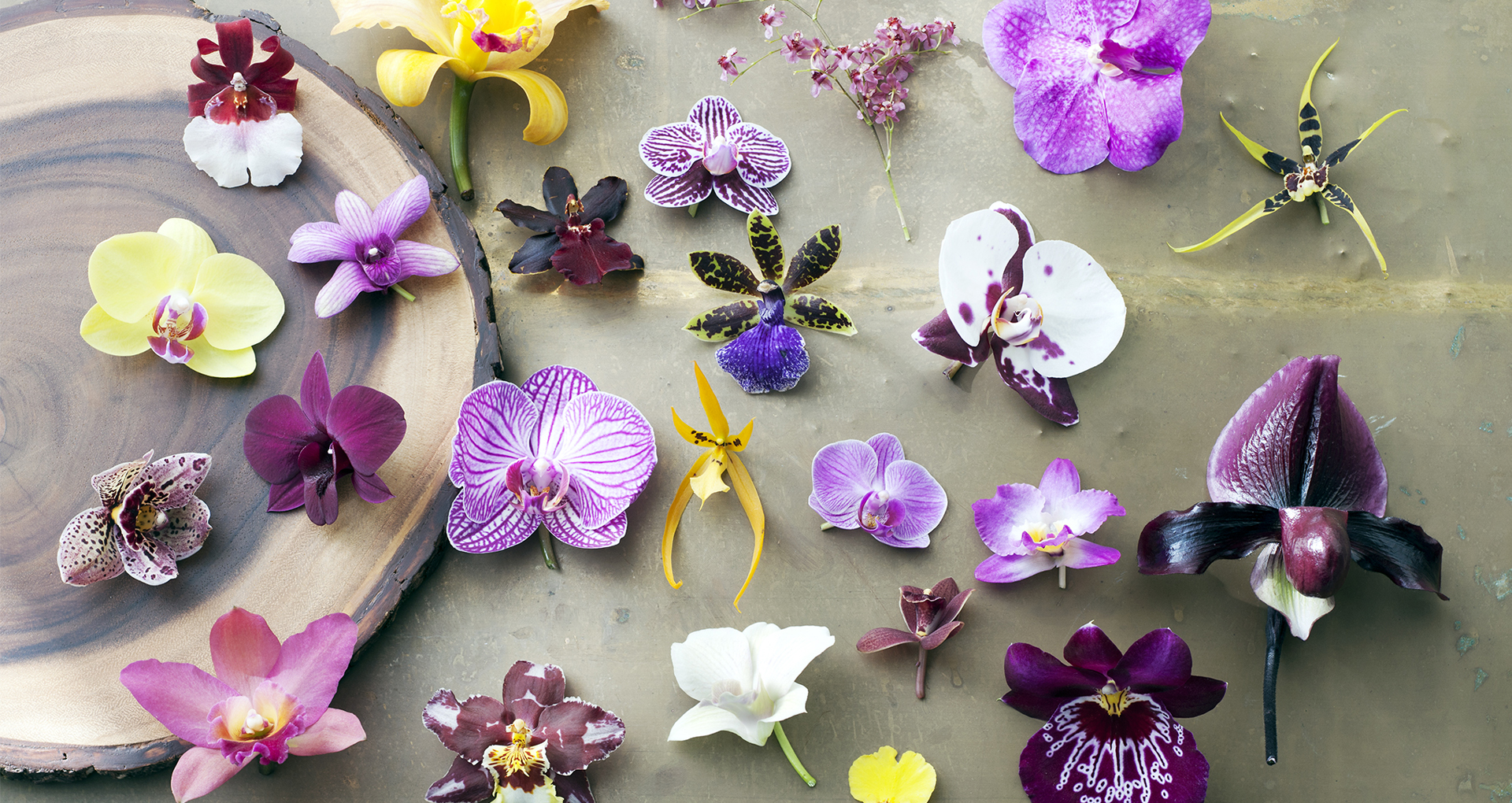 Header Diverse Orchideeen Big