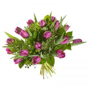 Fuchsia Tulp